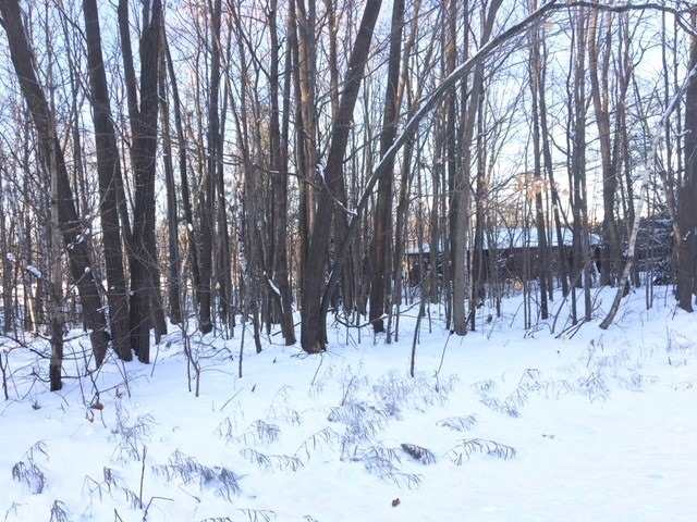 pictures of house for sale MLS: X4654046 located at 710 Steinkrauss Dr, Smith-Ennismore-Lakefield L0L1H0
